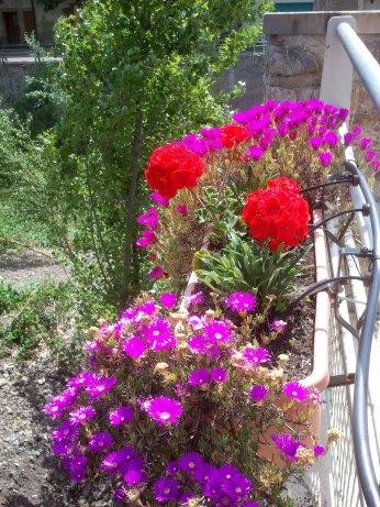 2015-05-14-Jardinières-006