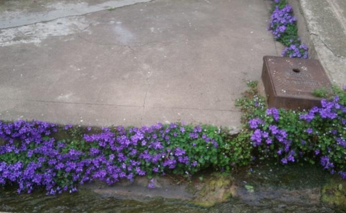 Le 5 Mai, devant la maison Gouzy