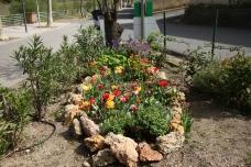 Bulbes Jardin Gérard Pla