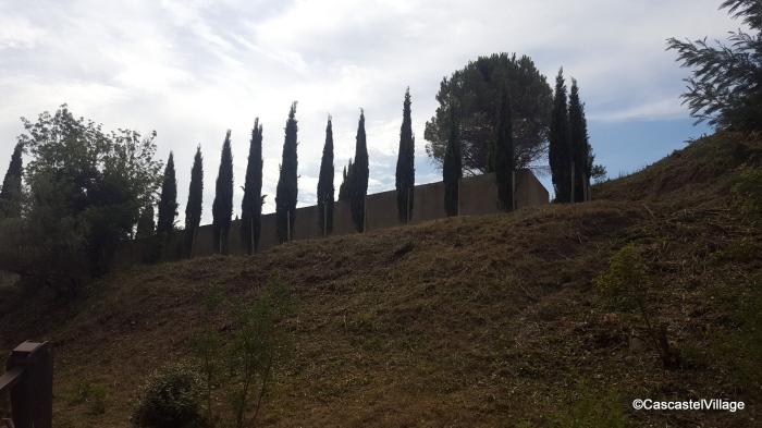 Rangée de cyprès sous le cimetière neuf